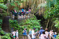 Makakenaffen am heiligen Affe-Wald Ubud, Bali Lizenzfreie Stockfotos
