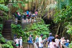 Makakenaffen am heiligen Affe-Wald Ubud, Bali Lizenzfreie Stockfotografie