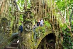Makakenaffen am heiligen Affe-Wald Ubud, Bali Stockfotografie