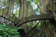 Makakenaffen am heiligen Affe-Wald Ubud, Bali Lizenzfreies Stockfoto