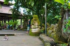 Makakenaffen am heiligen Affe-Wald Ubud, Bali Lizenzfreies Stockbild