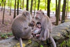 Makakenaffen mit Jungen Lizenzfreies Stockfoto