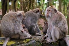 Makakenaffen mit Jungen Lizenzfreie Stockbilder