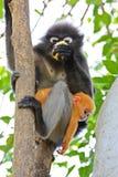 Makakenmutter mit Baby Lizenzfreies Stockbild