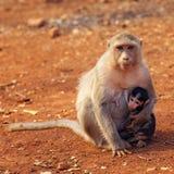 Makakenmutter und -baby Lizenzfreie Stockfotografie