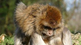 makaki zbiory