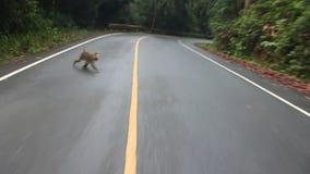 Makaki na drodze zbiory