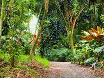 Makapu'u Oahu de barlavento Imagem de Stock Royalty Free