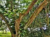 Makapu'u windzugewandtes Oahu stockfotos