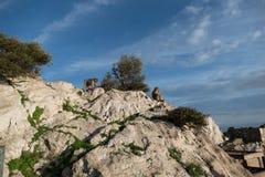 Makaque-Affe auf einem Gibraltar-Felsen Lizenzfreie Stockbilder