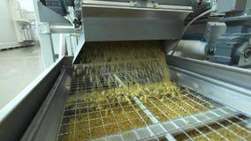Makaron fabryka i makaron produkcji sceny Zamyka w górę suchego makaronu rozlewa od maszynowej jednostki na nowożytnej produkcji  zbiory wideo