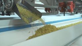 Makaron fabryka i makaron produkcji sceny Zamyka w górę suchego makaronu rozlewa od maszynowej jednostki na nowożytnej produkcji  zbiory