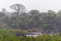 Makasutu national forest in Gambia stock photos