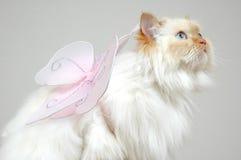 Free Make A Wish Royalty Free Stock Image - 416226