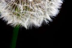 Free Make A Wish Stock Photo - 806710