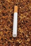 Make a cigarette with organic tobacco Royalty Free Stock Image