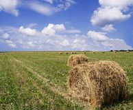 Make hay while the sun shines. Blue sunny sky, prime hay drying time on the farm Stock Image