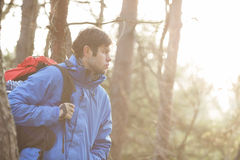 Make hiker carrying backpack in forest Royalty Free Stock Images