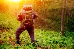 Make hiker carrying backpack in forest stock photography