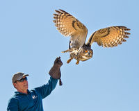 Make puts his hawk up in the air Stock Photography