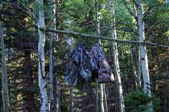 Make shift Bear bag hanging in tree. Camping Safety. In the Colorado Mountains stock photography