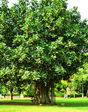 Make trees your religion, for they give and give, asking nothing in return Stock Photography