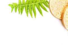 Two round cosmetic sponge and fresh green fern isolated on white background. place for text. concept of personal care, cleanliness stock photos