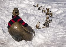 `Make way for Ducklings` with Mrs Duck wearing her winter scarf, stock image