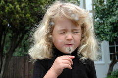 Make a wish. Three year old girl blowing on a dandelion puff and making a wish Royalty Free Stock Photography
