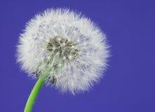Make a Wish 2 royalty free stock image