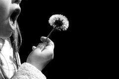 Make a Wish. Young child blowing on dandelion Royalty Free Stock Photo