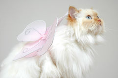 Make a wish. Cat looking up to make a wish. cat fairy, cat with wings. Lexus the cat. Fly away Royalty Free Stock Image