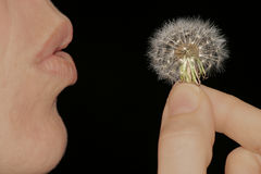 Make a wish. Making Wishes Royalty Free Stock Images