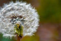 Make a wish stock photography