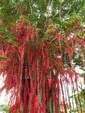 Wish tree In Malaysia. Make a wish, hope that the motherland will flourish and prosper, world peace, good health royalty free stock image