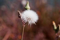 Make a wish Royalty Free Stock Images