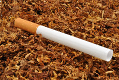 Make your own cigarette with tobacco Royalty Free Stock Image