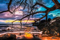 Makena Landing Tree Colorful Sunset. This colorful sunset was taken at Makena Landing in Maui Hawaii. The Keawe tree branches span across the photo making for a royalty free stock images