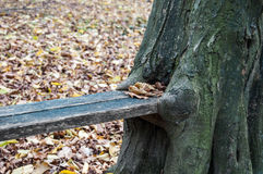 Makeshift bench in the woods Royalty Free Stock Images