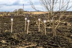 Makeshift crosses on the graves of Wehrmacht soldiers on militar Royalty Free Stock Photo