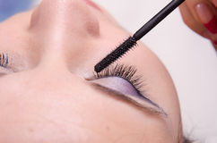 Makeup artist tints lashes mascara Royalty Free Stock Photo