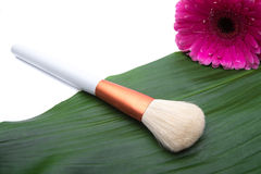 Makeup Brush on green leaf Royalty Free Stock Image