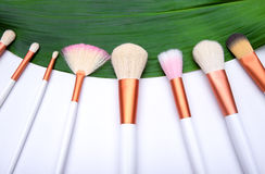 Makeup Brushes on green leaf Stock Images