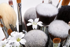 Makeup brushes set with flowers. Chickweed. White background Stock Image