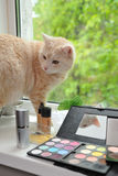 Makeup and cat. The cat waits the mistress at a window Stock Image