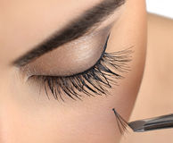 Makeup close-up. Eyelash extension. Royalty Free Stock Images