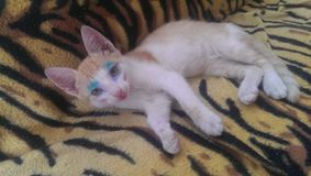 Makeup kota błękit Zdjęcia Royalty Free