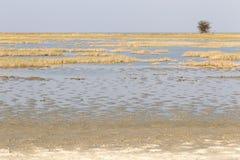 Makgadikgadi filtert Nationaal Park expansief landschap royalty-vrije stock afbeelding