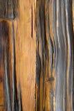 Makhaa drewno Zdjęcia Stock