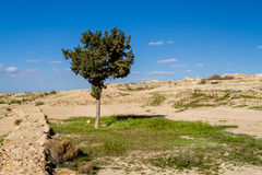 The Makhtesh Gadol, tree and grass in the spring, Negev desert, Israel Stock Photo